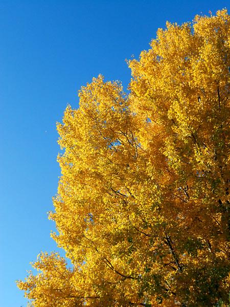 Herbsttag, Bild 2