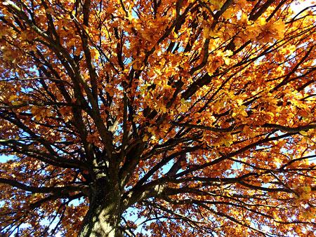 Herbsttag, Bild 3
